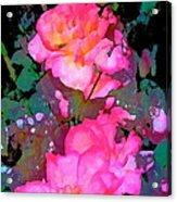 Rose 193 Acrylic Print by Pamela Cooper