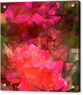 Rose 198 Acrylic Print by Pamela Cooper