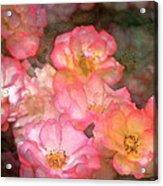 Rose 212 Acrylic Print by Pamela Cooper
