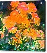 Rose 215 Acrylic Print by Pamela Cooper