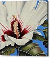Rose Of Sharon Acrylic Print by Karen Beasley