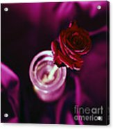 Rose Acrylic Print by Stelios Kleanthous