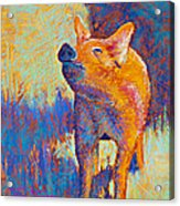 Rosie Acrylic Print by Tracy L Teeter