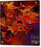 Royal Autumn A Acrylic Print by Jennifer Apffel