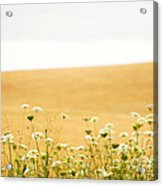 Run With Me Through A Field Of Wild Flowers Acrylic Print by Artist and Photographer Laura Wrede