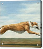 Running Free Acrylic Print by James W Johnson