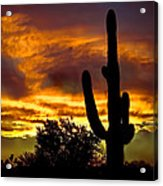Saguaro Silhouette  Acrylic Print by Robert Bales