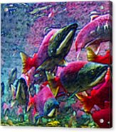 Salmon Run - Square - 2013-0103 Acrylic Print by Wingsdomain Art and Photography