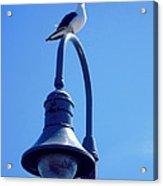 San Clemente Sea Gull  Acrylic Print by Don Struke