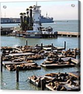 San Francisco Pier 39 Sea Lions 5d26102 Acrylic Print by Wingsdomain Art and Photography