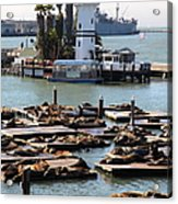 San Francisco Pier 39 Sea Lions 5d26103 Acrylic Print by Wingsdomain Art and Photography