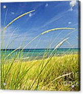 Sand Dunes At Beach Acrylic Print by Elena Elisseeva