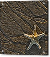 Sand Prints And Starfish  Acrylic Print by Susan Candelario