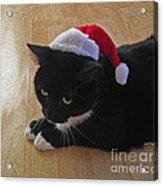 Santa Kitty Acrylic Print by Cheryl Young
