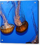Sea Nettle Jelly Fish 5d25076 Acrylic Print by Wingsdomain Art and Photography