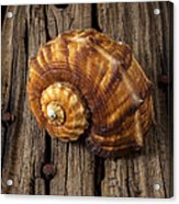 Sea Snail Shell On Old Wood Acrylic Print by Garry Gay