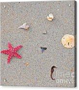 Sea Swag - Red Acrylic Print by Al Powell Photography USA
