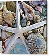 Sea Treasure Acrylic Print by Colleen Kammerer