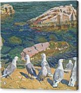 Seagulls Acrylic Print by Arkadij Aleksandrovic Rylov