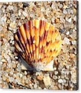 Seashell On Sandy Beach Acrylic Print by Carol Groenen