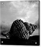 Seashell Without The Sea 2 Acrylic Print by Bob Orsillo