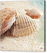 Seashells In The Wet Sand Acrylic Print by Sandra Cunningham