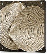 Seashells Spectacular No 11 Acrylic Print by Ben and Raisa Gertsberg