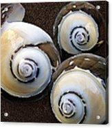 Seashells Spectacular No 23 Acrylic Print by Ben and Raisa Gertsberg