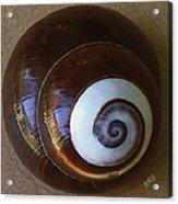 Seashells Spectacular No 26 Acrylic Print by Ben and Raisa Gertsberg