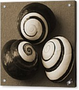 Seashells Spectacular No 28 Acrylic Print by Ben and Raisa Gertsberg