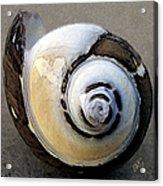 Seashells Spectacular No 3 Acrylic Print by Ben and Raisa Gertsberg