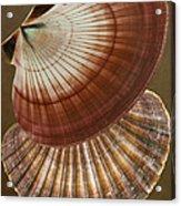 Seashells Spectacular No 53 Acrylic Print by Ben and Raisa Gertsberg