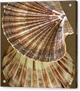 Seashells Spectacular No 54 Acrylic Print by Ben and Raisa Gertsberg