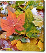 Seasonal Mix Acrylic Print by Rona Black