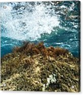 Seaweed Acrylic Print by Science Photo Library