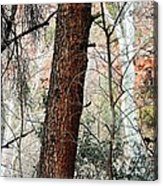 Sedona Layers Acrylic Print by Todd Sherlock