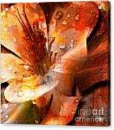 Seeds II Acrylic Print by Yanni Theodorou