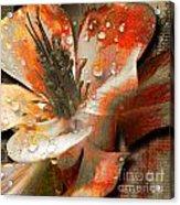 Seeds Acrylic Print by Yanni Theodorou