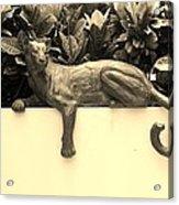 Sepia Cat Acrylic Print by Rob Hans