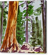 Sequoia Park - California Sketchbook Project  Acrylic Print by Irina Sztukowski