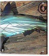 Shark Abstract Metal Wall Art Acrylic Print by Robert Blackwell