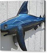 Shark Blue Bull Shark Acrylic Print by Robert Blackwell