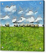 Sheep Herd Acrylic Print by Ayse Deniz