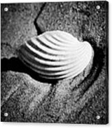 Shell On Sand Black And White Photo Acrylic Print by Raimond Klavins