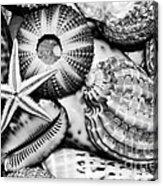 Shellscape In Monochrome Acrylic Print by Kaye Menner