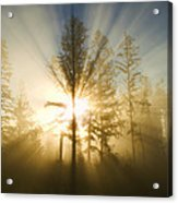 Shining Through Acrylic Print by Peggy Collins