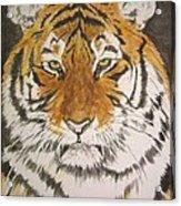 Siberian Tiger Acrylic Print by Regan J Smith