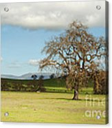 Silicon Valley Hills Acrylic Print by Artist and Photographer Laura Wrede