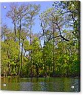 Silver River Florida Acrylic Print by Christine Till
