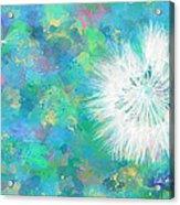 Silverpuff Dandelion Wish Acrylic Print by Nikki Marie Smith